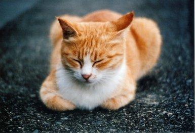猫2A.JPG