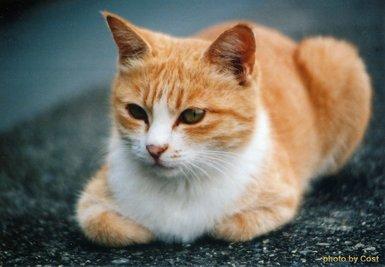 猫AJPG.jpg