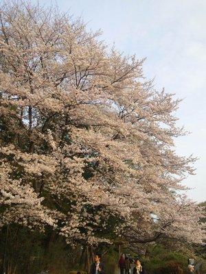 20110410zenpukuji1b.jpg