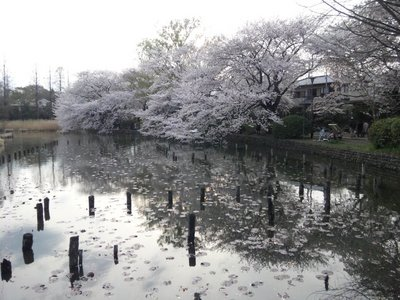 20110410zenpukuji2b.jpg