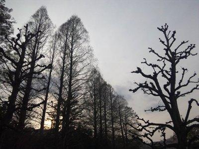 20110410zenpukuji6b.jpg