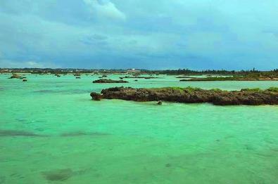 とりさん粟国島画像2.jpg
