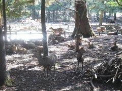 鹿の苑2.jpg