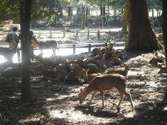 鹿の苑3.jpg