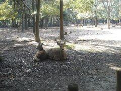 鹿の苑1.jpg