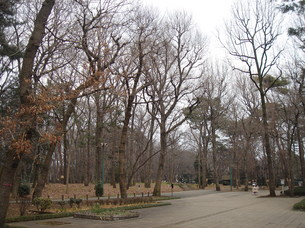 小金井公園 (3).JPG