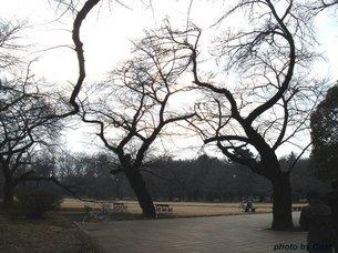 小金井公園A.jpg