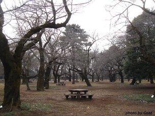 小金井公園C.jpg