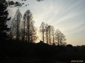 善福寺公園09春8.jpg