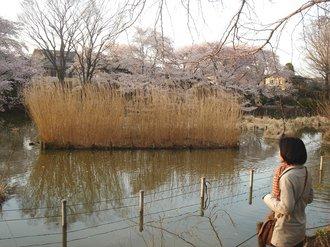 善福寺公園2009春2.jpg