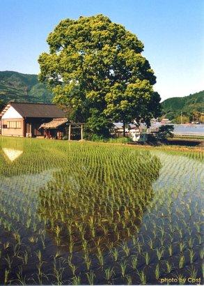 田舎の風景加工.jpg