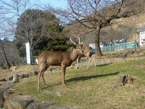 奈良、若草山 (1)加工.jpg