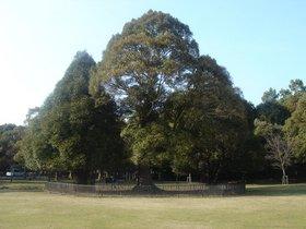 奈良公園 (2)加工.jpg
