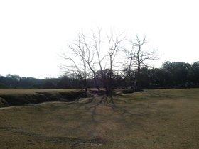 奈良公園追加.jpg