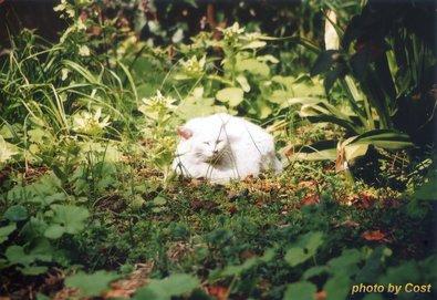 猫4A.JPG