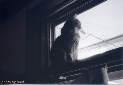 猫、外の世界kako.jpg