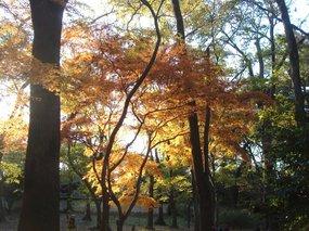 糺の森3.jpg