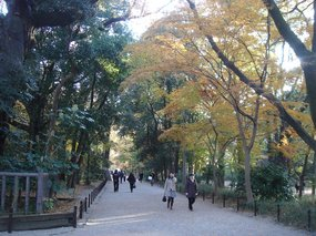 糺の森、参道.jpg