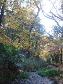 糺の森7.jpg