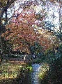 糺の森�C.jpg