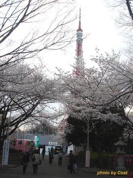 zojyoji2.jpg